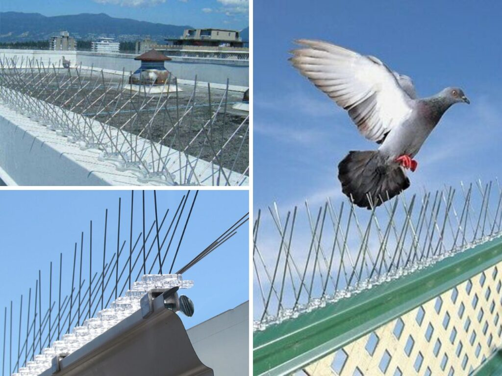 Pigeon spikes in Pune and PCMC